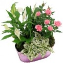 panier de plantes fleuries